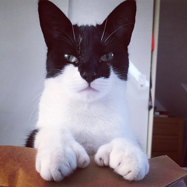 gatto che somiglia batman -