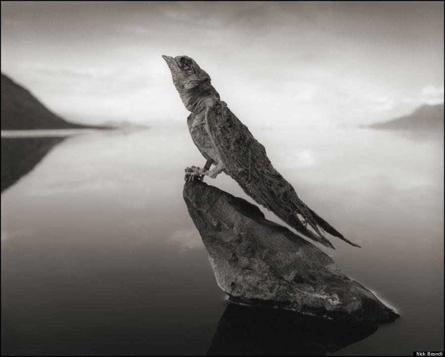 lago che trasforma in pietra gli animali -