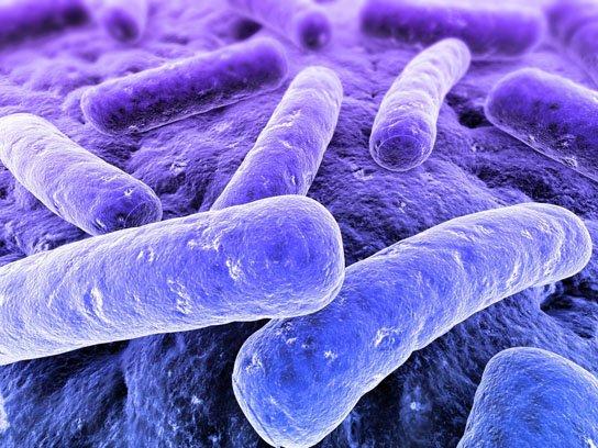 I batteri hanno il senso del tatto e riconoscono le superfici