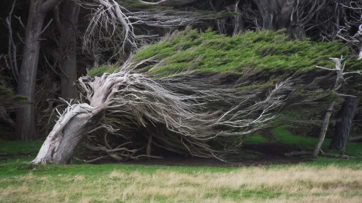 la foresta degli alberi piegati dal vento -