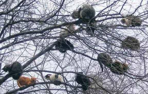 Perchè i gatti rimangono bloccati sugli alberi?