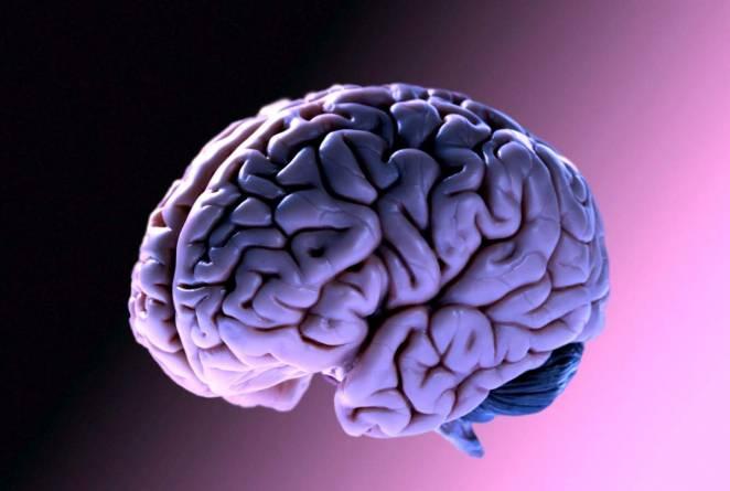 Il cervello è un muscolo, un organo o grasso?